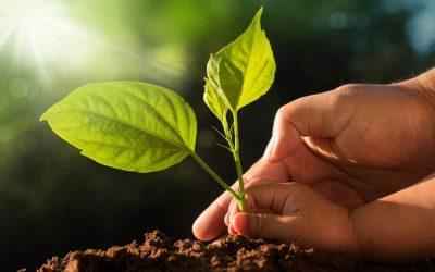 Declaración de Sostenibilidad en Solidaridad con el Acuerdo Climático de París