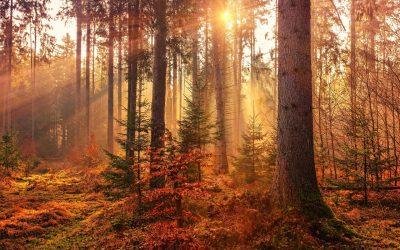 Finding Humanity: November 11 – 17